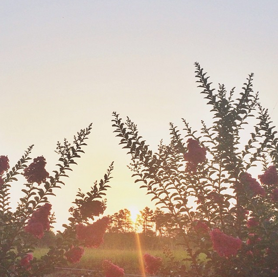 Screen Shot 2014-06-20 at 8.33.07 AM